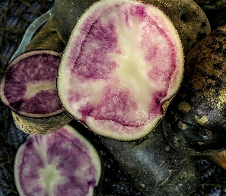 patateviola2